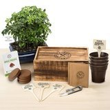 Garden Republic Bonsai Tree Starter Kit